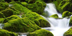 Wasser gefiltert, rein, sauber, gesund & ohne Hormone, Chemikalien